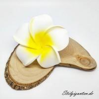Blume Frangpipani weiss gelb
