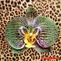 Orchidee Berlin