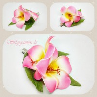 Blume Frangipani rosa gruene blaetter