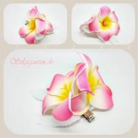 Blume Pink frangipanie weisse Blaetter
