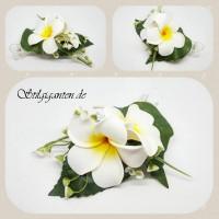 Blume weiss frangipani NEU