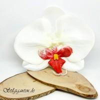 Blume Grosse orchidee