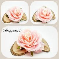 Blume Rosa Rose
