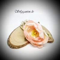 Blume Rosenbluete rosa
