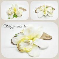 Blume Weiße orchideen GROSS